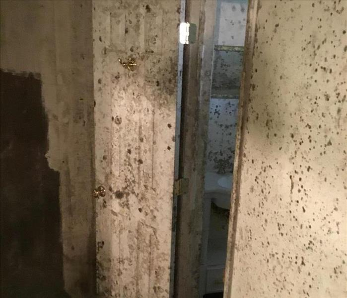 Water Leak That Created Mold Damage